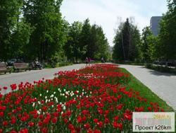 Московский украсят 138 тысяч цветов