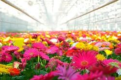 В Московском пройдет фестиваль «Цветочный джем»