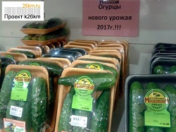 Новый урожай огурцов