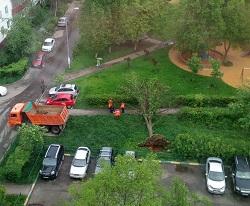 В Московском  ураганный ветер поломал деревья