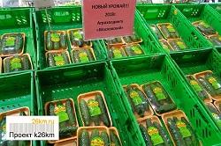 Стартовали продажи огурцов нового урожая