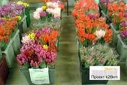 Стоимость тюльпанов в магазине агрохолдинга
