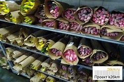 Стоимость тюльпанов в Ульяновском производственном управлении