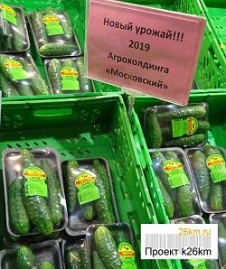 Первый в этом году урожай огурцов поступил в продажу