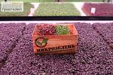Микрозелень Агрокомбината поступила в продажу