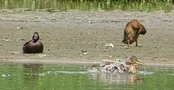 Познавательные стенды и резные фигурки животных разместятся на экотропе