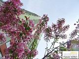 Прогулка по Московскому: фото-впечатления от весеннего города
