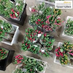 Стоимость тюльпанов в магазине агрокомбината