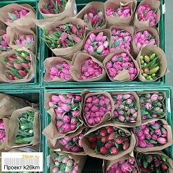 Цены на тюльпаны в фирменных магазинах Московского