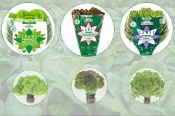 Агрохолдинг выпустил новые виды салатов
